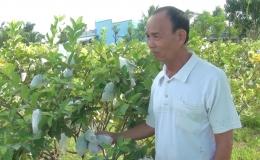 Chuyên đề 2/7: Hiệu quả từ mô hình trồng ổi