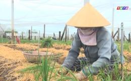 Chuyên đề 27.8 – Nông dân Gò Công Đông tìm lối ra cho nông sản trong mùa dịch covid 19