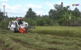 Chuyên đề 24.8 – Nông dân thu hoạch lúa vẫn tuân thủ 5K
