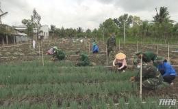 Đồn Biên phòng Tân Thành giúp nông dân thu hoạch nông sản