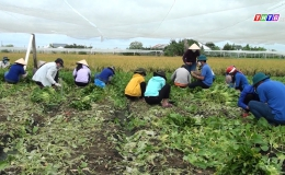 Chuyên đề 11.8 – Tuổi trẻ TX Gò Công tình nguyện chăm lo người dân khó khăn
