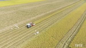 UBND Tiền Giang tìm giải pháp thu mua lúa vụ Đông Xuân