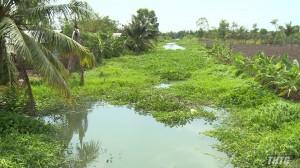 Lục bình xâm lấn trở lại ở nhiều tuyến kênh địa bàn huyện Gò Công Đông