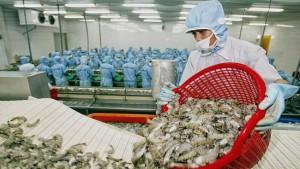 Mỹ áp thuế 0% cho tôm Việt Nam