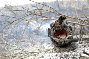 Cháy rừng Amazon: Cuộc khủng hoảng quốc tế