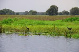 Vườn Quốc gia Tràm Chim bị đe dọa
