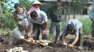 Hội thảo Mô hình trồng nấm rơm trên bã thải lá sả