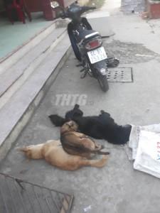 Công an Xã Bình Trưng bắt giữ 02 đối tượng trộm chó