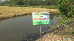 Tân Phú Đông sơ kết mô hình nuôi xen canh tôm – lúa