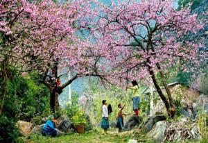 7 điểm đến tuyệt vời nhất Việt Nam để du lịch vào tháng 1