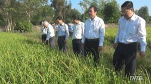 Lãnh đạo huyện Cái Bè kiểm tra tình hình dịch bệnh trên cây lúa