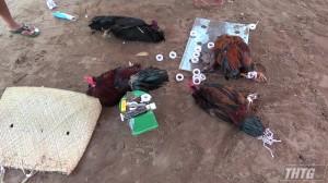 Công an Tiền Giang triệt xóa tụ điểm đá gà tại huyện Châu Thành