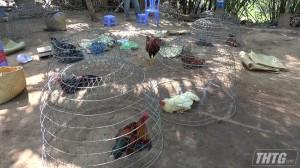 Công an Châu Thành triệt xóa tụ điểm đá gà, tạm giữ 13 đối tượng và 44 triệu đồng