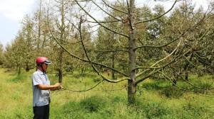 ĐBSCL gỡ khó cho cây ăn trái