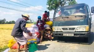 ĐBSCL vượt qua hạn mặn – Tiếp tục sản xuất lúa gạo dồi dào