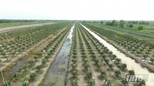 Đoàn giám sát HĐND tỉnh Tiền Giang làm việc với UBND tỉnh về thực hiện đề án tái cơ cấu ngành nông nghiệp