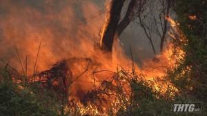 Cháy gần khu dân cư thị trấn Mỹ Phước, nhiều người hốt hoảng