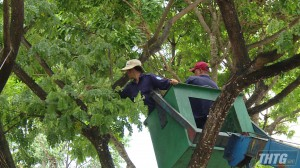 28 trường học Tp. Mỹ Tho đề xuất cắt tỉa hơn 280 cây xanh