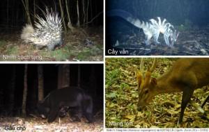 Phát hiện nhiều loài thú quý hiếm ở Vườn quốc gia Bidoup – Núi Bà