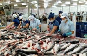 Giá cá tra thấp, nhiều hộ nuôi cá ở ĐBSCL lỗ nặng