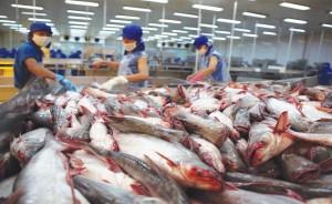 """Cá tra Việt Nam vẫn """"kẹt"""" thị trường xuất khẩu"""