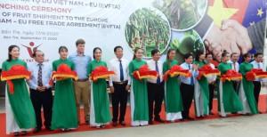 Xuất khẩu lô hàng trái cây đầu tiên sang châu Âu theo Hiệp định EVFTA
