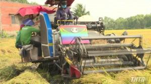 Huyện Tân Phước bắt đầu thu hoạch lúa hè thu năm 2020