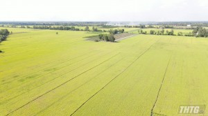 Sở NN&PTNT Tiền Giang khảo sát các mô hình sản xuất nông nghiệp