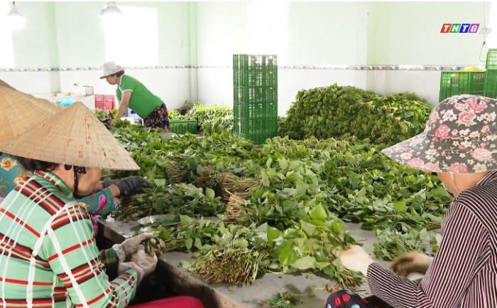 Xét nghiệm chất lượng rau Viet Gap – Bảo đảm đầu ra an toàn