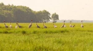 Nhiều giống loài ở ĐBSCL dần biến mất