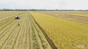 Xuất khẩu thuận lợi, giá lúa gạo tăng mạnh