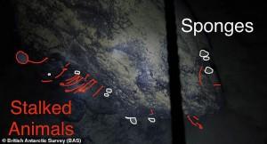 """Sinh vật lạ dưới """"mộ băng"""" 900 mét, sống không cần thức ăn, ánh sáng"""