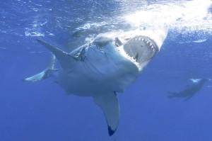 70% cá mập và cá đuối biến mất