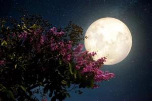 """Đêm nay và mai, Việt Nam chiêm ngưỡng """"siêu trăng hồng"""" kỳ ảo"""