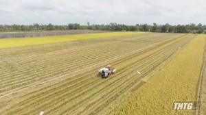 Hội thảo về giải pháp tăng độ phì nhiêu cho đất lúa các huyện phía Tây