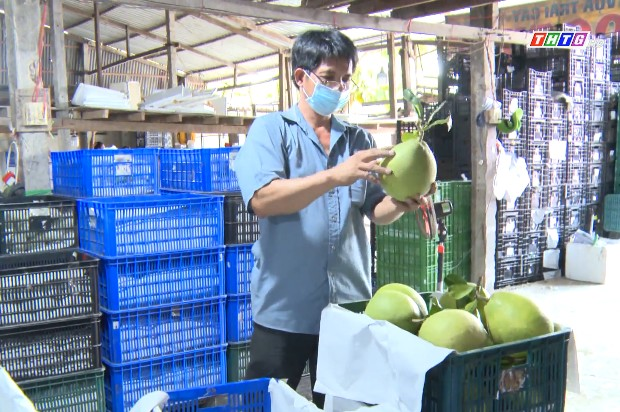 Lập chuỗi liên kết khép kín – giải pháp đầu ra hiệu quả cho trái cây tại Cái Bè