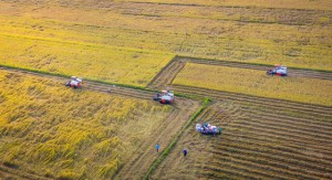 Tính toán giảm thâm canh lúa gạo ở ĐBSCL